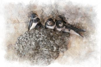 swallows-2660837_1920