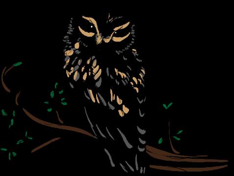owl-3596674_result